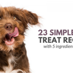 21 Simple Dog Treat Recipes: 5 Ingredients or Less