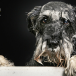 Why Do Dogs Go Crazy After a Bath?