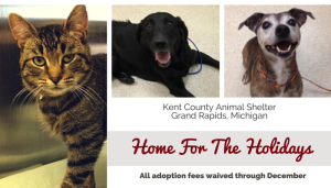 Michigan Shelter Waives Adoption Fees Through End Of The Year