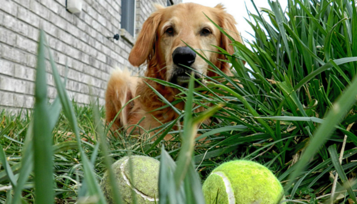 importance of play for dogs