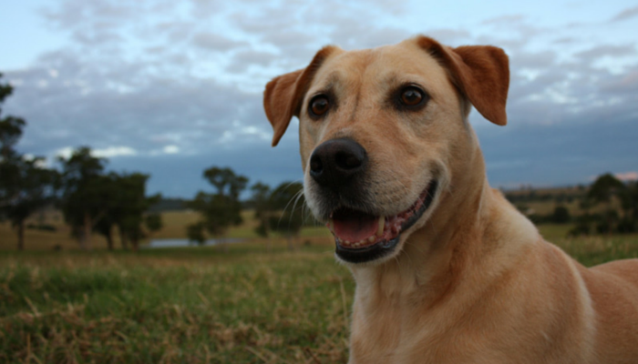 new study on playtime for dogs