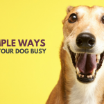 33 Simple Ways to Keep Your Dog Busy Indoors