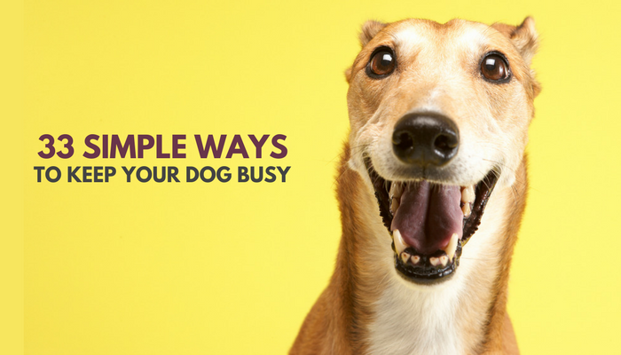 33 Ways to Keep Your Dog Busy Indoors