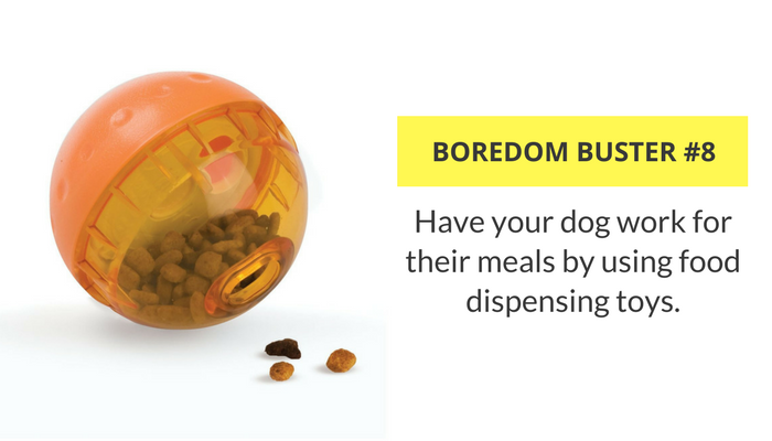 33 Ways to Keep Your Dog Busy