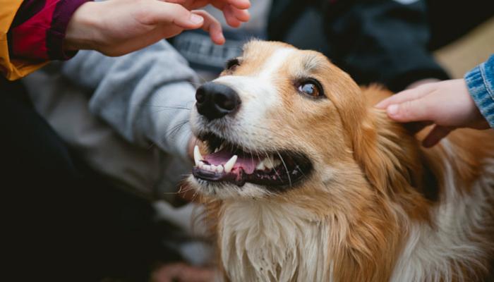 preventing dog bites in children