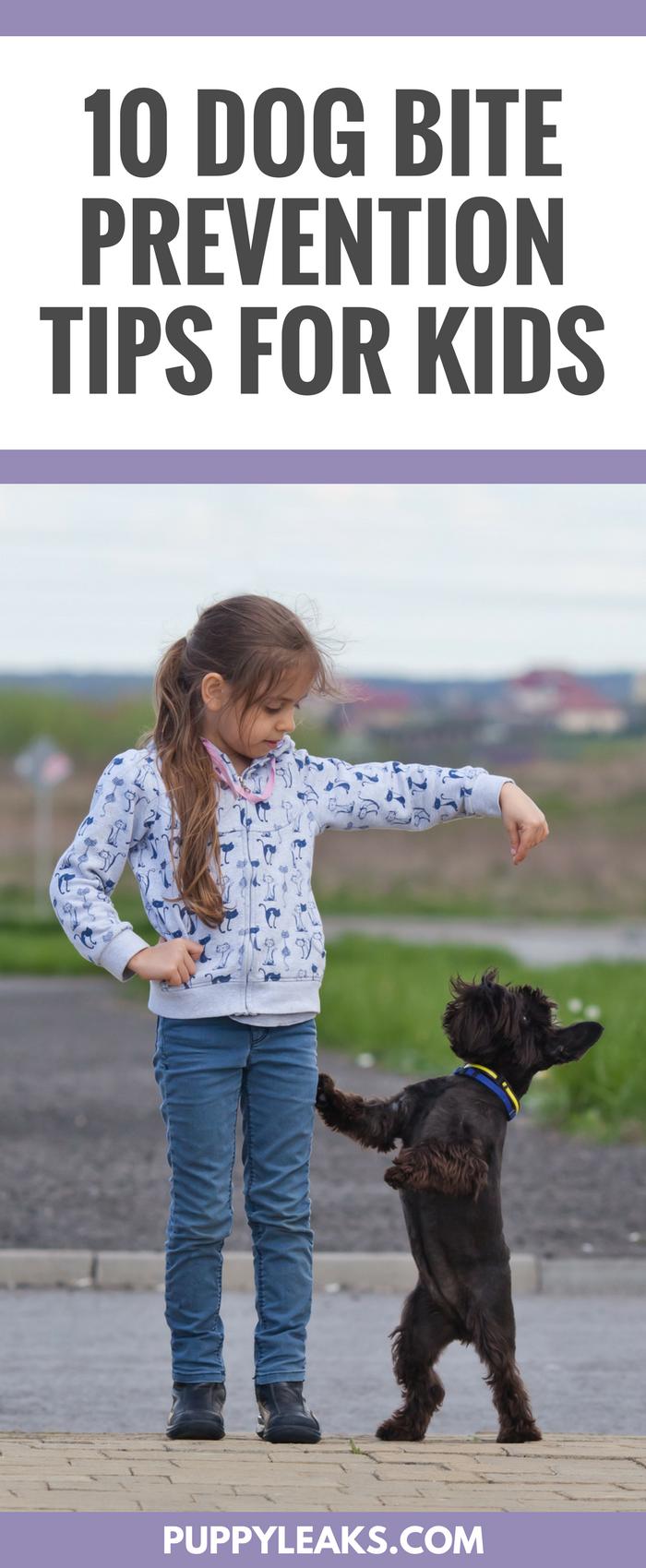 10 Dog Bite Prevention Tips for Kids
