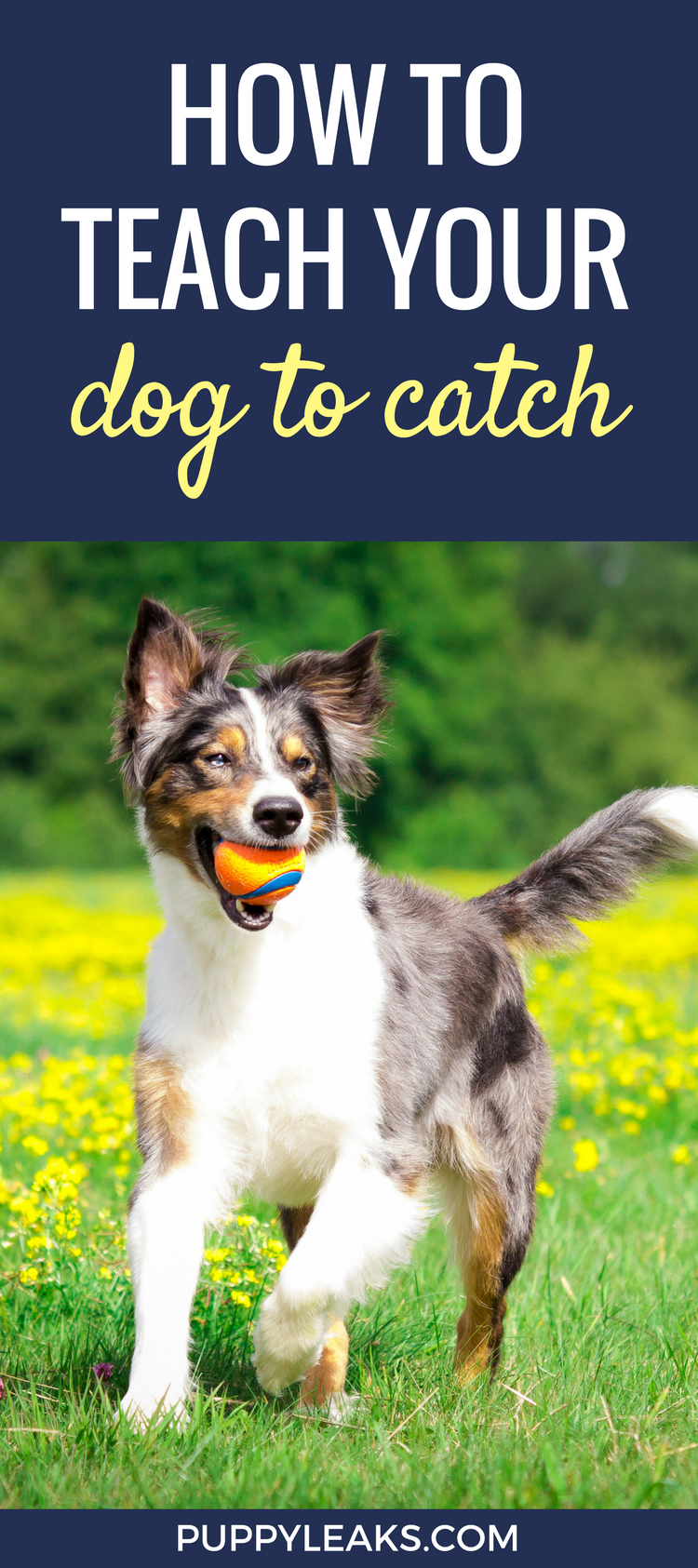 The Easy Way To Teach Your Dog To Catch