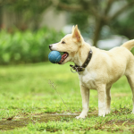 The Simple Way to Teach Your Dog to Catch
