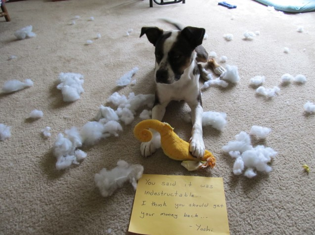 Toys My Dog Can T Destroy