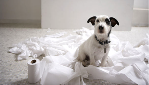 Roundup #2: Our Favorite Dog Articles of the Week