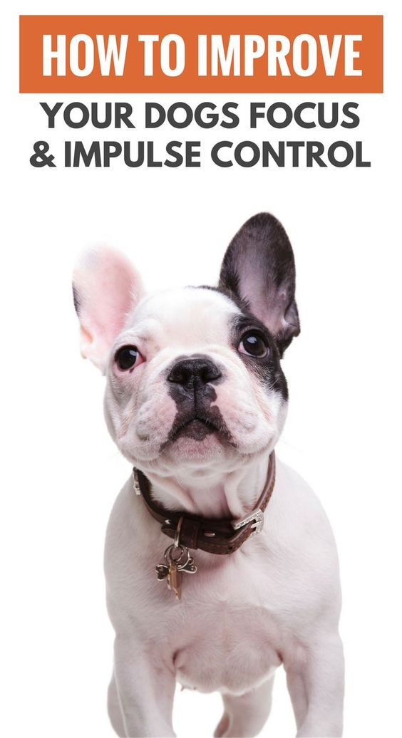 5 Ways to Improve Your Dogs Impulse Control