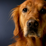 Nothing In Life is Free – Should Dogs Earn Affection?
