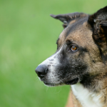 3 Simple Ways to Check Your Dog For Fleas at Home