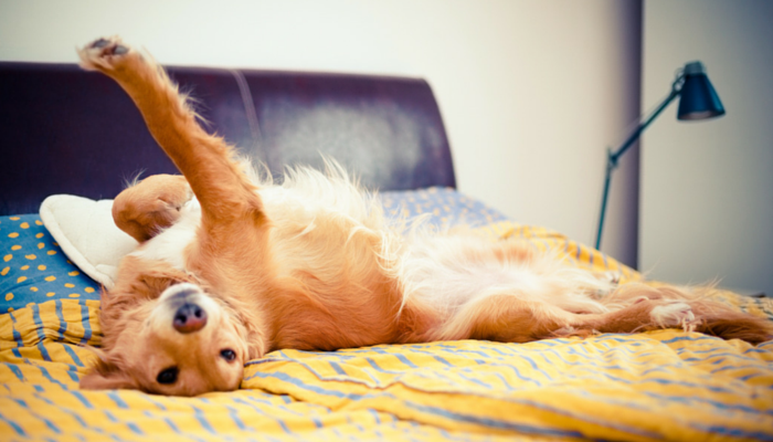 8 Simple Ways to Dog Proof Your Furniture