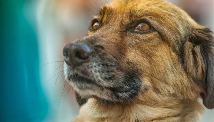 can your dog tell when you're lying?