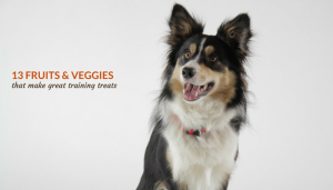 13 Fruits & Veggies That Are Good For Dogs