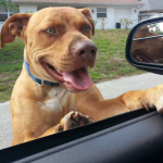 Weekly Roundup – Our Favorite Dog Stories of The Week