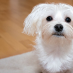 20 Fruits & Veggies That Are Good For Dogs