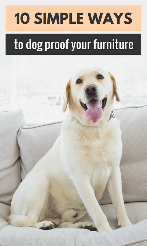10 Simple Ways to Dog Proof Your Furniture