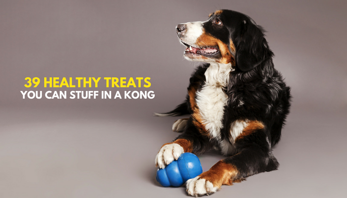 39 Healthy Treats to Stuff in a Kong