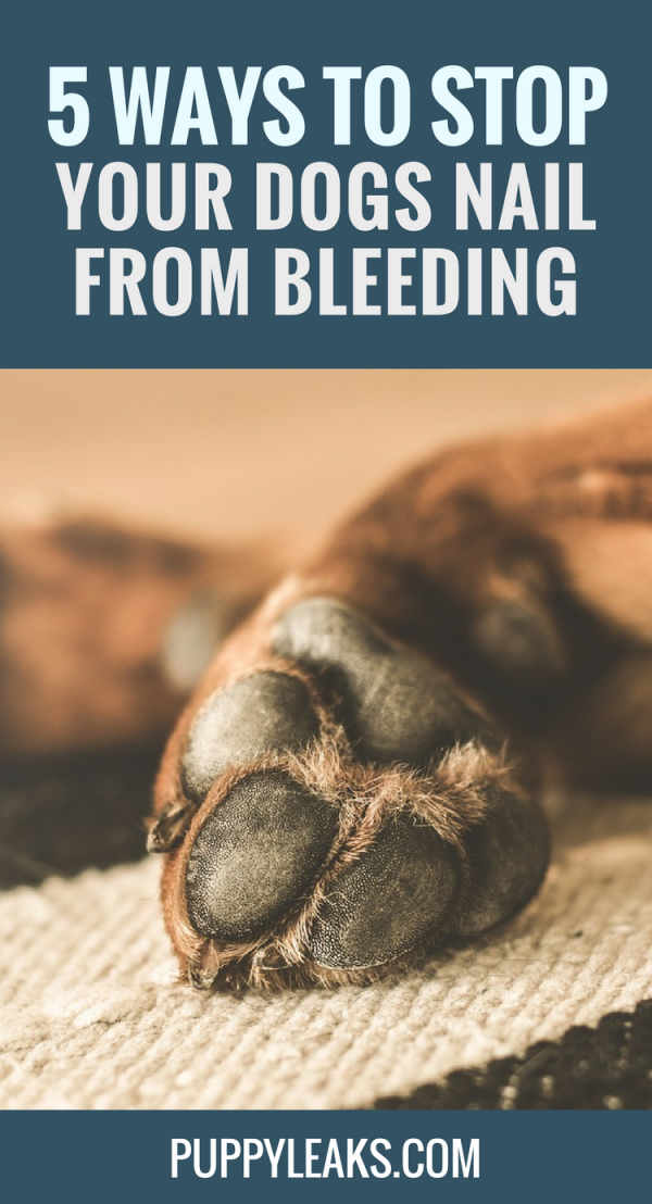 How to Stop Your Dogs Nail From Bleeding