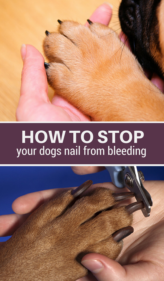 Did you clip your dogs nail too short? Here's 5 simple methods you can use to stop your dogs nail from bleeding including DIY remedies such as using flour & baking soda.