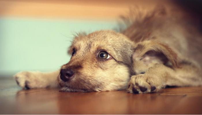 Yelp to Make Your Dog Stop Biring