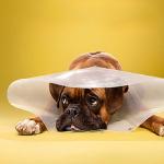 Roundup #13 – Our Favorite Dog Articles, Deals, & Videos of the Week