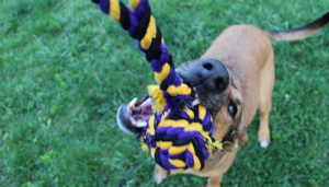 Awesome tug toy for training