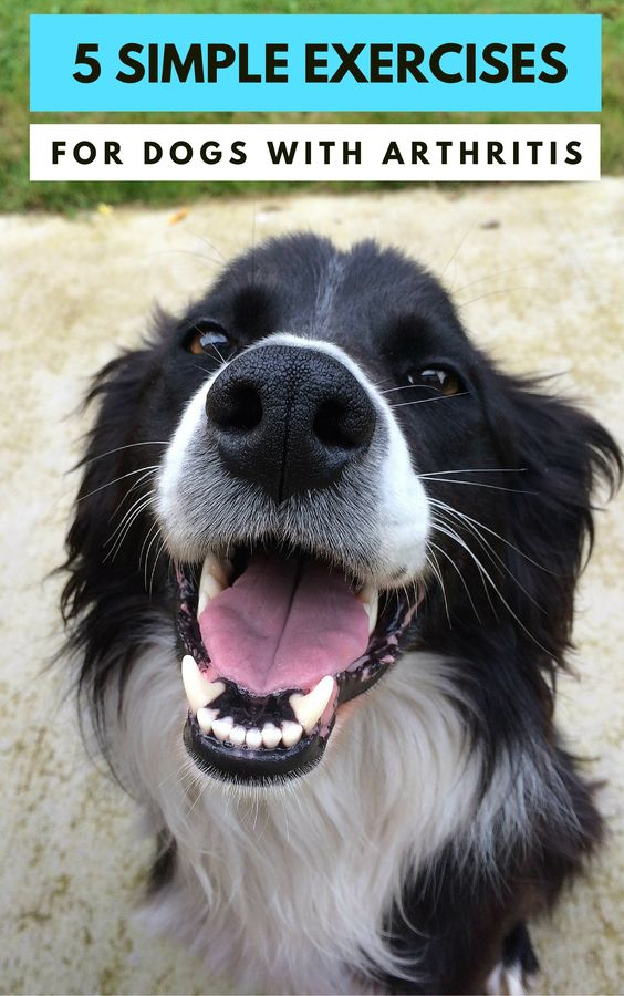 5 Simple Exercises For Dogs With Arthritis. How to exercise your dog with arthritis.