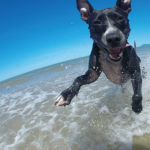 Roundup 19 – Our Favorite Dog Stories, Deals, & Videos