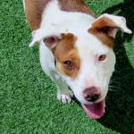 Roundup 21 – Favorite Dog Articles, Deals, & Videos