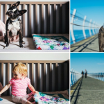 Roundup 24 – Favorite Dog Articles, Deals, & Videos of the Week