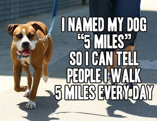 Walk Your Dog Every Day