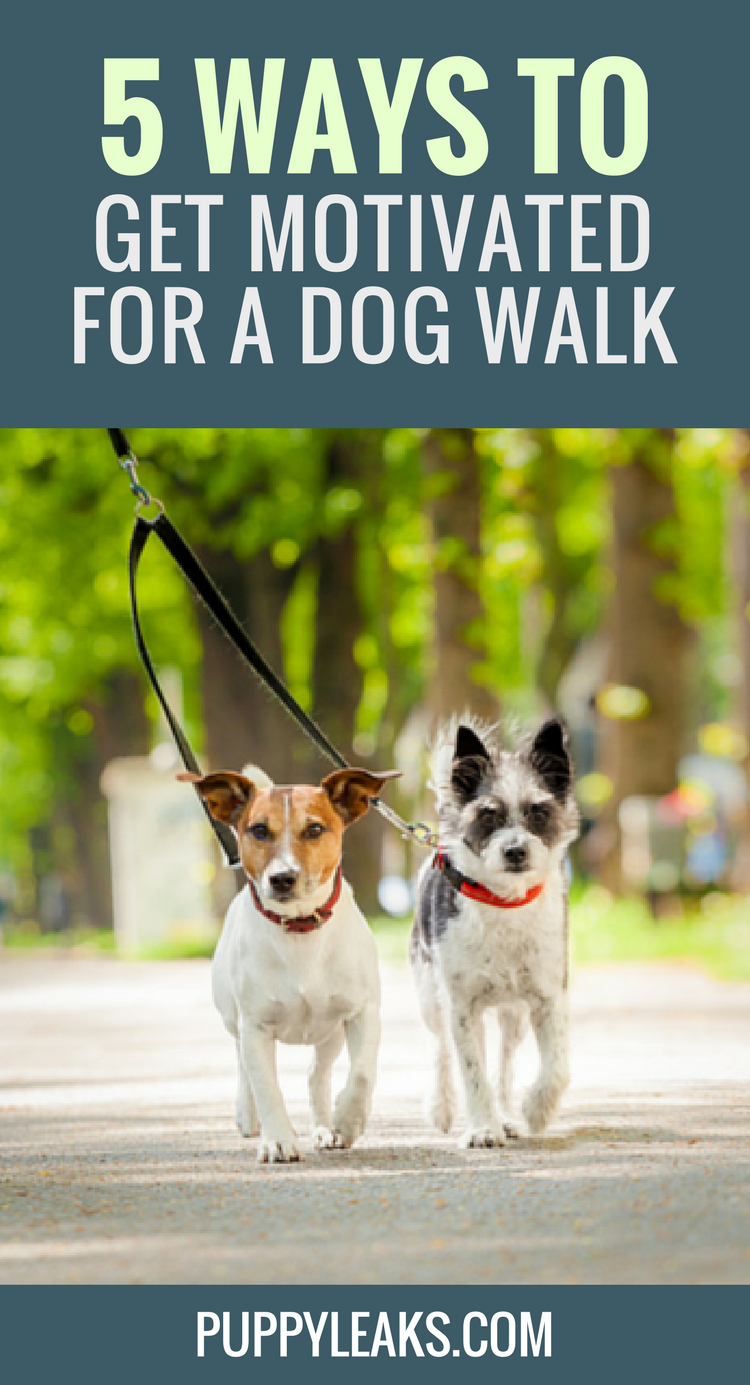 How to Motivate Yourself to Walk the Dog