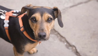 5 Simple Ways to Motivate Yourself For a Dog Walk