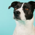 Dogs & Humans Can Estimate a Dogs Size By His Growl
