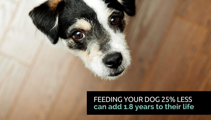 feed your dog less