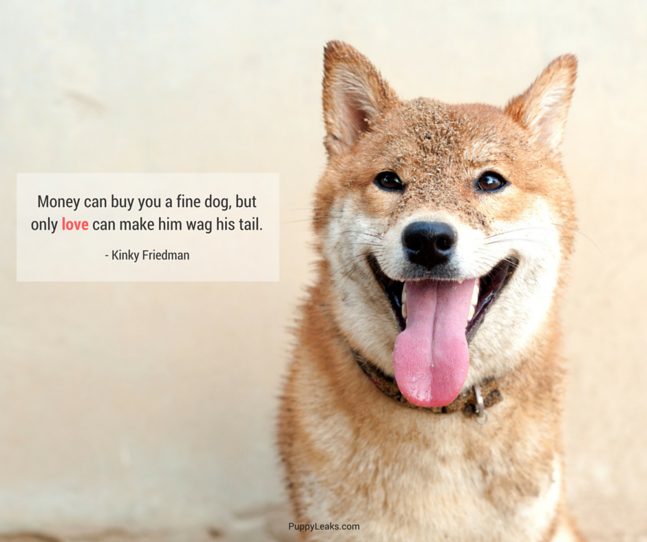 75 of the best dog inspired quotes puppy leaks for Best dogs for you