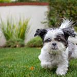 Roundup 35 – Favorite Dog Articles, Deals & Videos of the Week