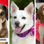 7 Stunning Senior Dogs Waiting For Their Second Chance