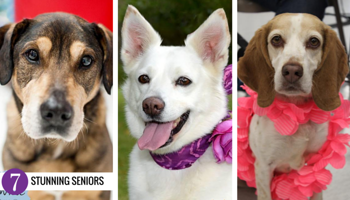 Adoptable Senior Dogs in Michigan
