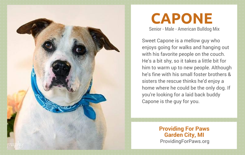 senior dogs for adoption in Michigan