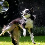 Do Yourself a Favor and Teach Your Dog to Chase Bubbles