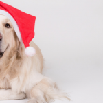 The Best Holiday Deals on Dog Supplies