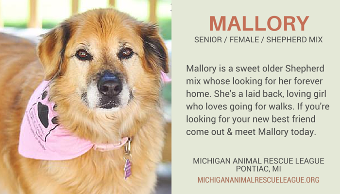 Stunning Senior Dogs for Adoption