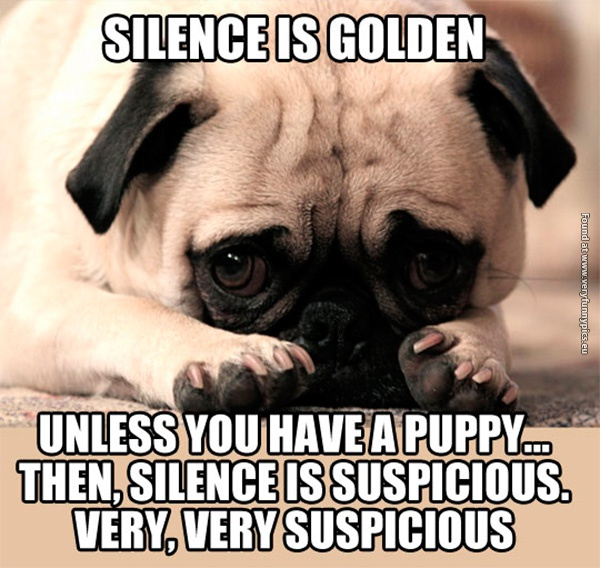 Silence is Golden, Unless You Have a Puppy