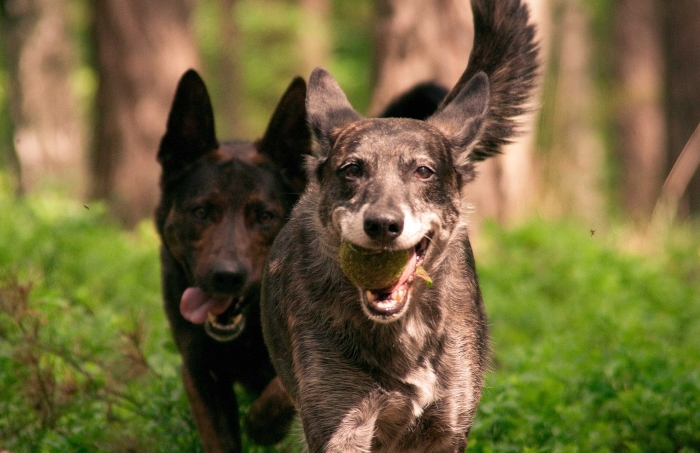 10 Training Tips & Myths for Dogs
