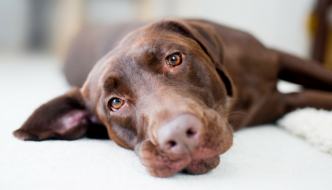 10 Dog Training Tips and Myths I'm Tired of Hearing