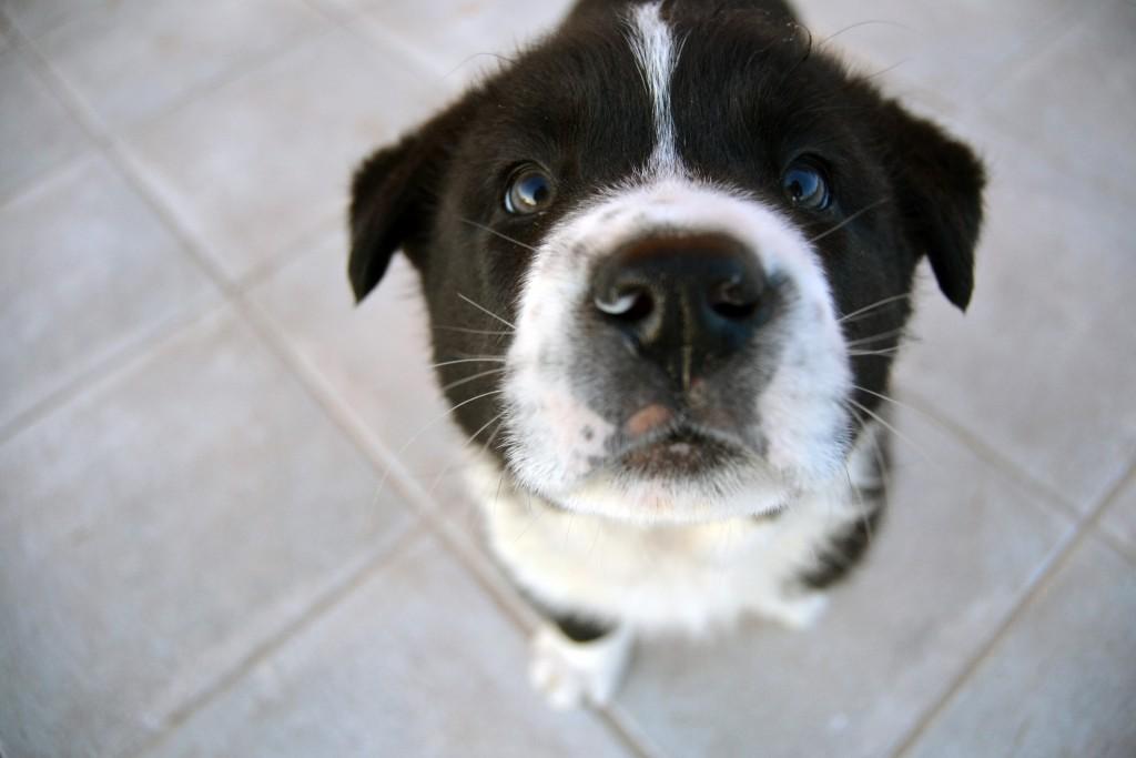 Dog Training Tips I'm Sick of Hearing